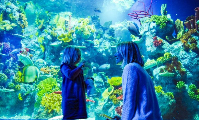 Bristol Aquarium - family-friendly bucket list Bristol