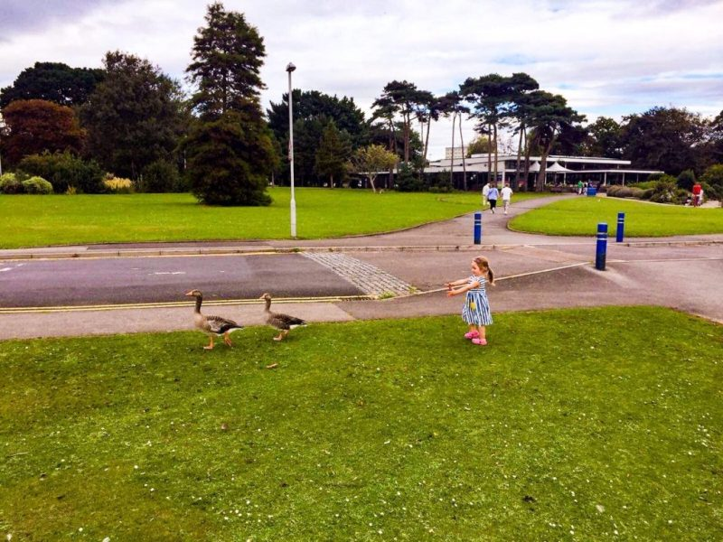 The Ark places to eat in Poole