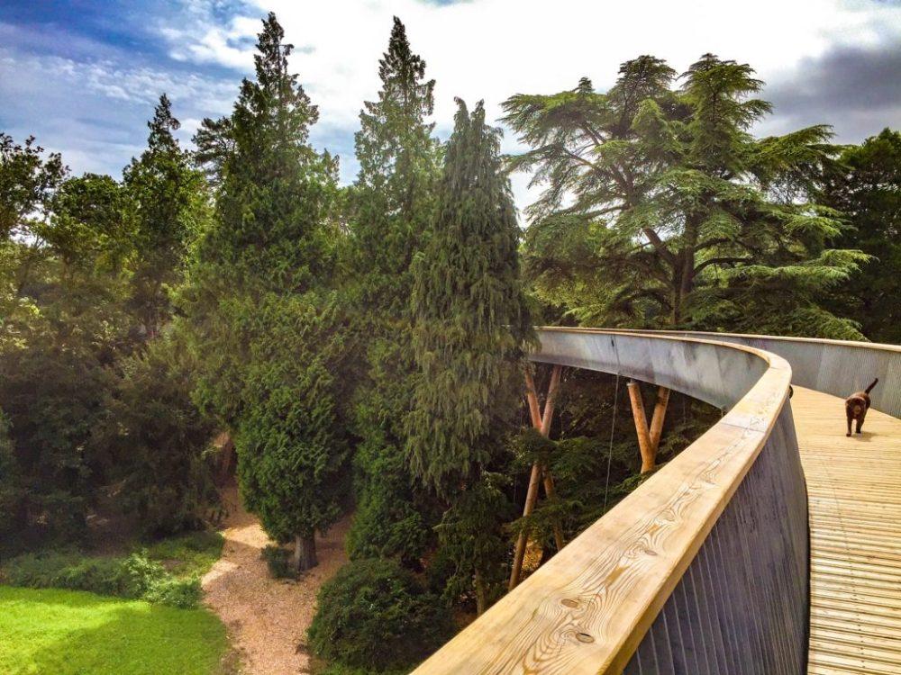 Westonbirt Arboretum treetop walkway