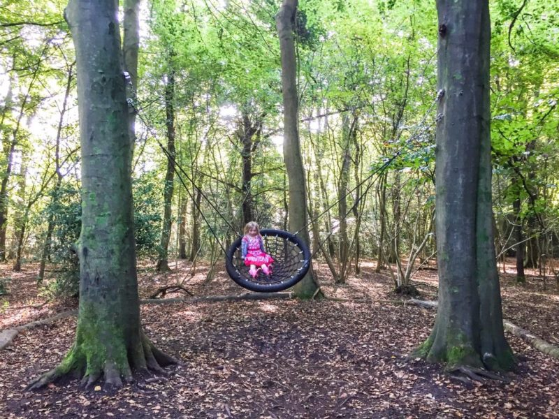 Leigh Woods National nature reserve tree swing