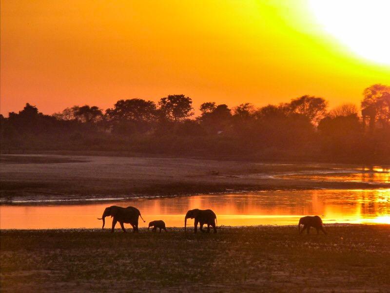 elephants at sunrise zambia africa