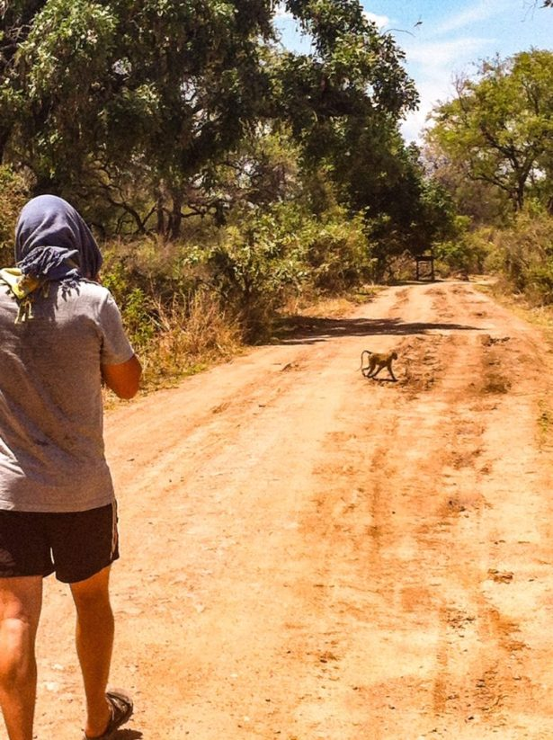 Monkey crossing path_from the travel diaries: my scariest travel moment
