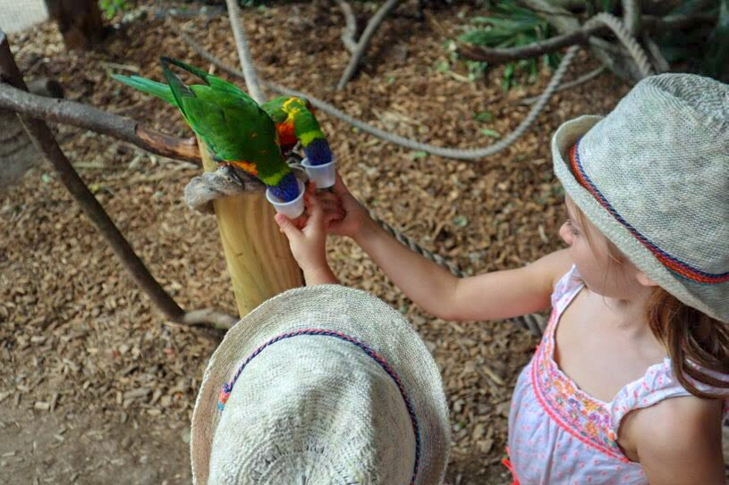 Feeding the lorikeets, Longleat safari park