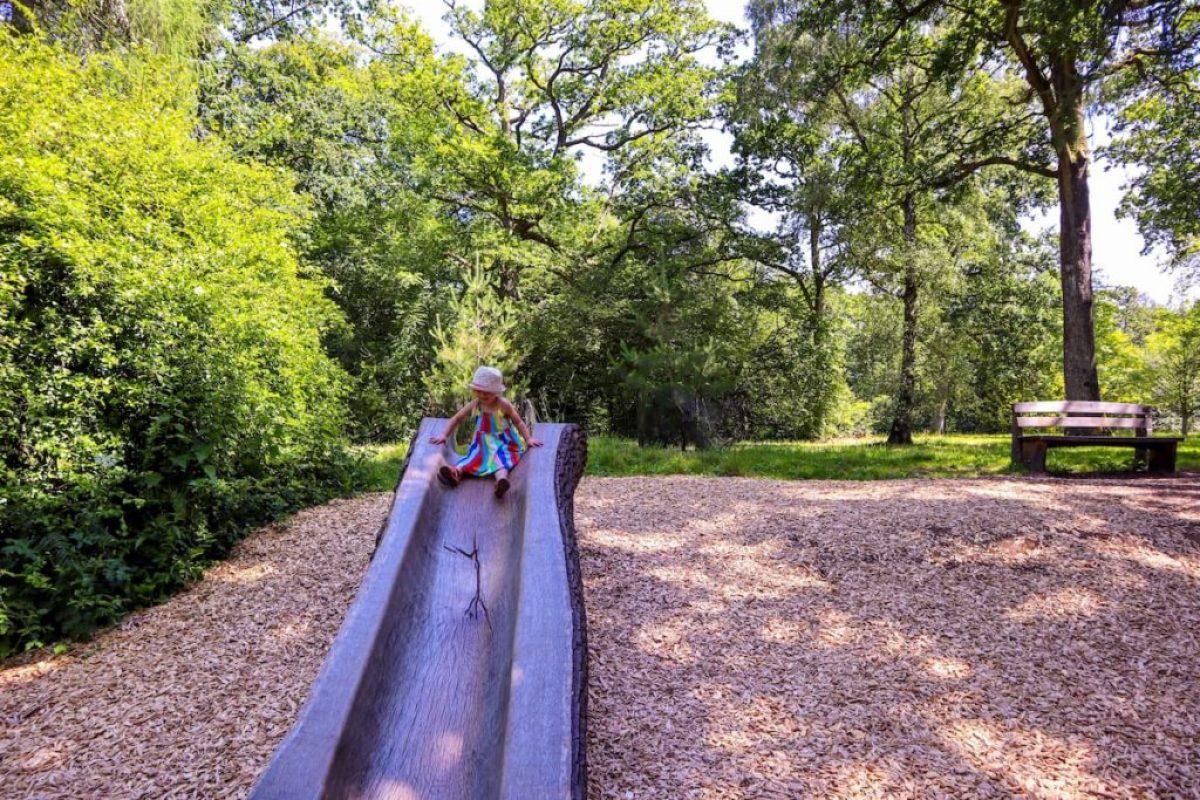 Tree slide westonbirt arboretum