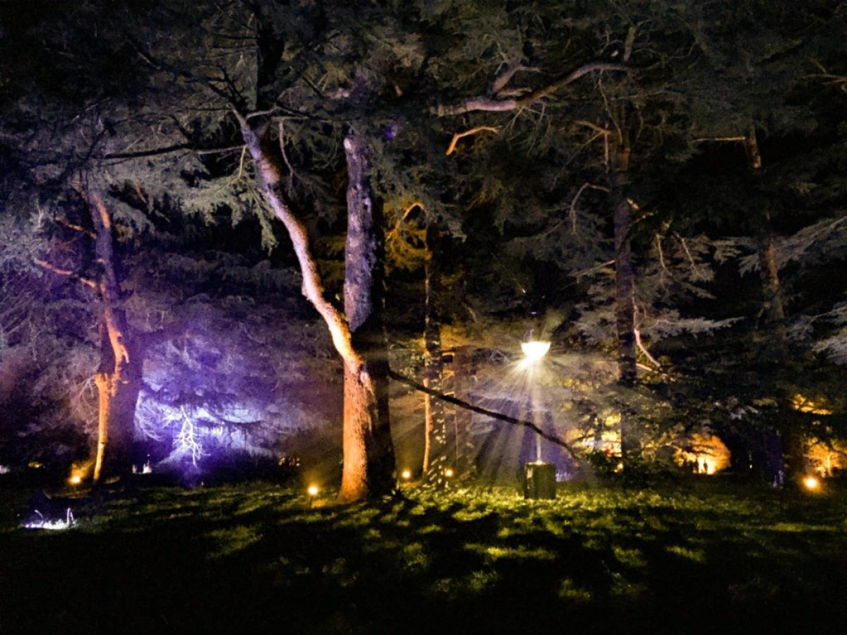 Westonbirt Arboretum trees - enchanted Christmas trees
