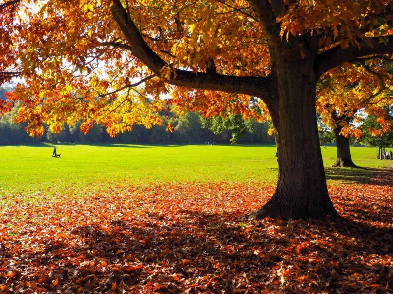 Autumn walks in Bristol