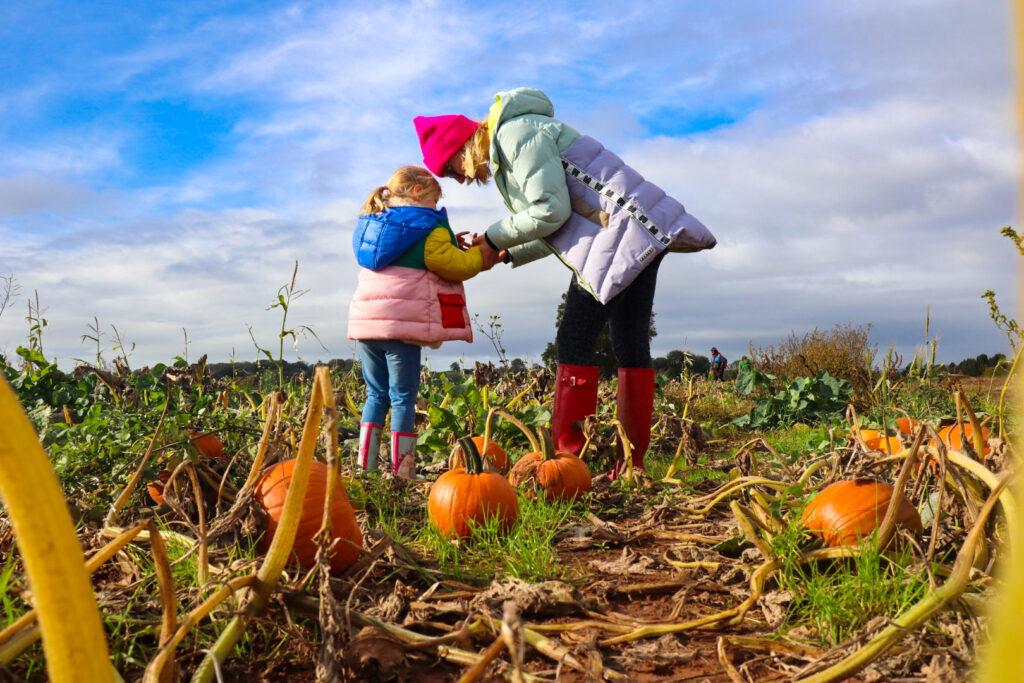 Farringtons pumpkin patch, near Bristol