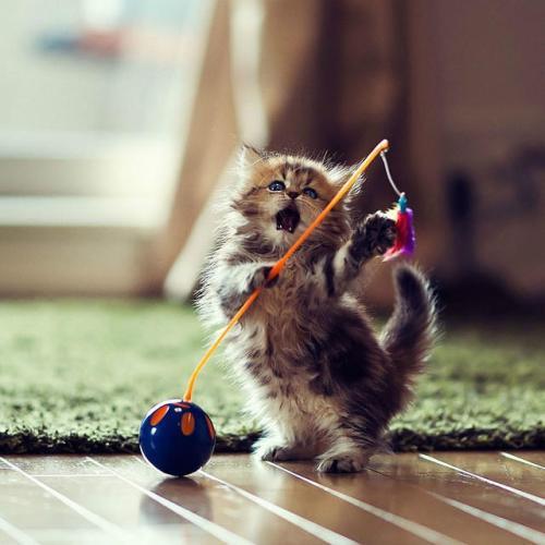 Cute Kitten Daisy iPad wallpapers 1024x1024 (06)