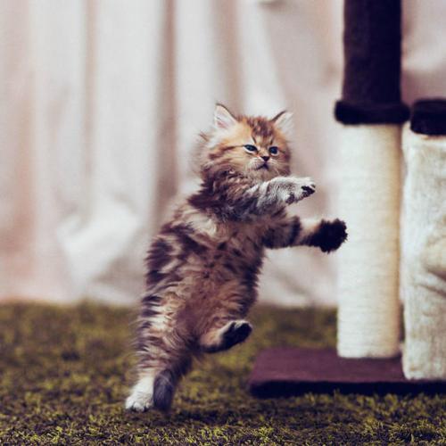 Cute Kitten Daisy iPad wallpapers 1024x1024 (13)