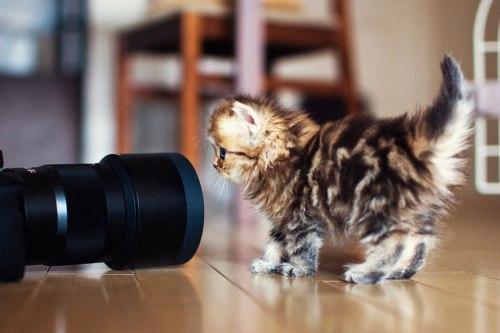 worlds-cutest-kitten-daisy-10