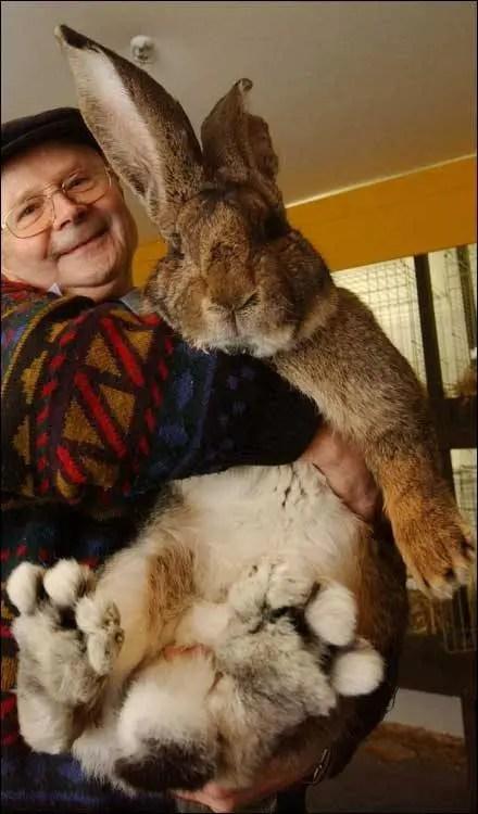 big_bunny_lg