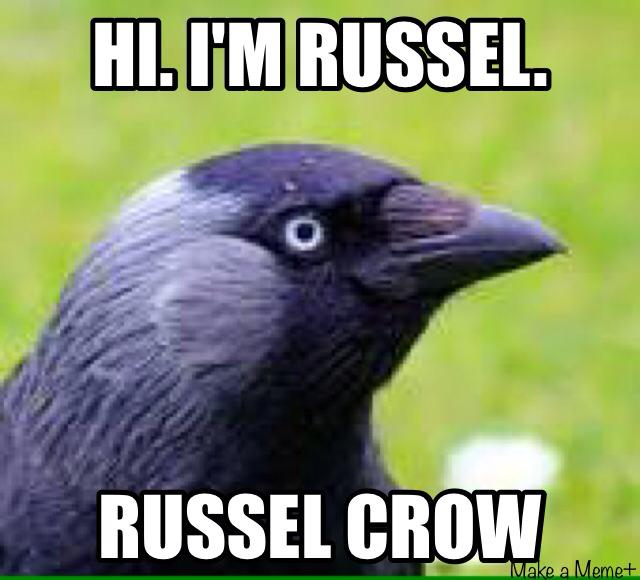 It is not a crow but I still think it is hilarious!