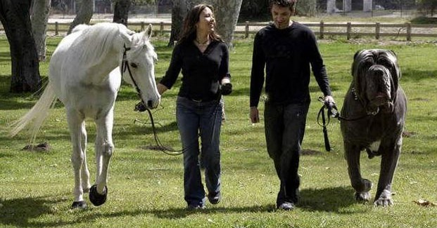 Most-Largest-Dog-Breeds-621x325