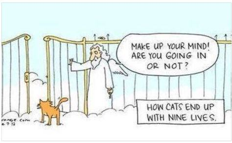 how-cats-ended-up-with-nine-lives