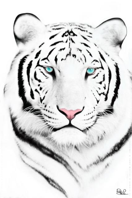 whitetigernl0