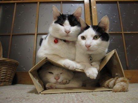 cat-on-top