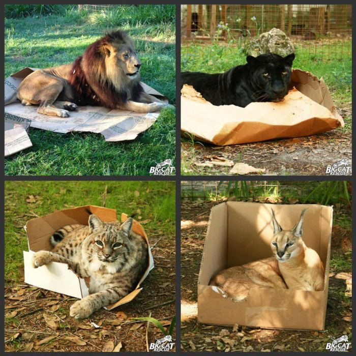 cats-in-boxes-1