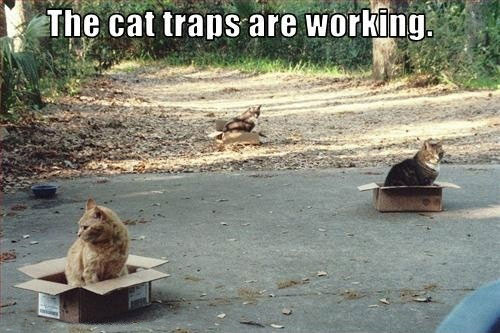 funny-cats-inside-boxes-traps