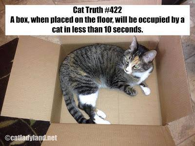 Truth-about-cats-and-boxes