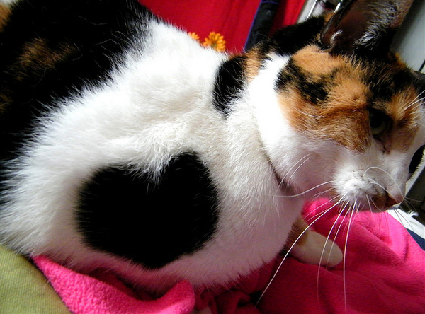 cats_hearts_on_fur_03