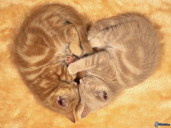 heart,-cats-163652
