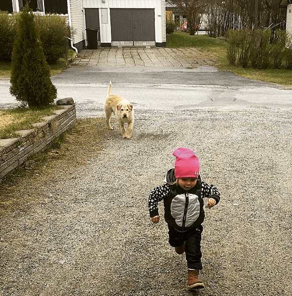 Playing with his pack