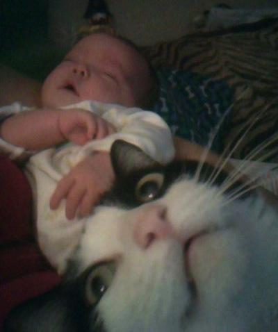 cat-photobomb-baby2