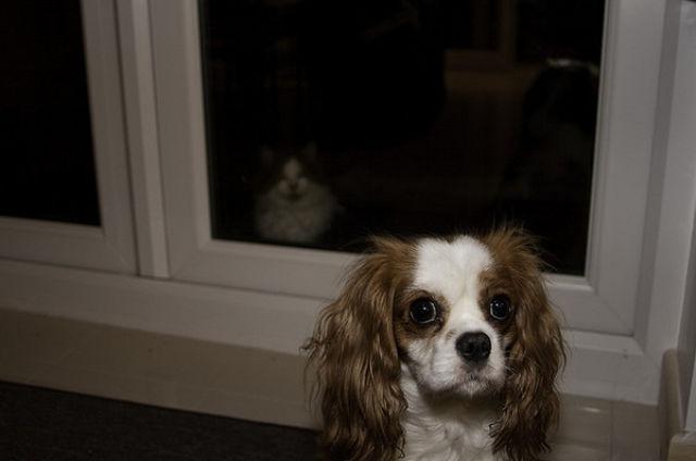 dogs_cats_photobomb_16