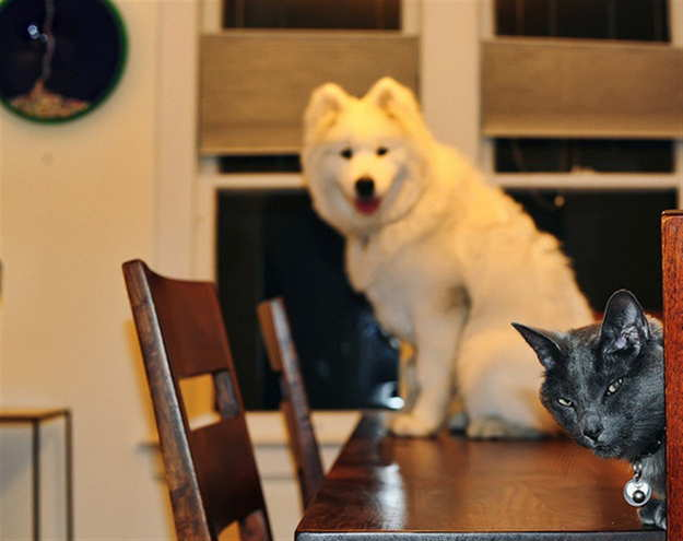 funniest-cats-photobombs-ever-4