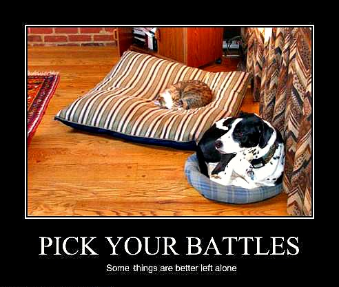 cat-and-dog-bed-stealing