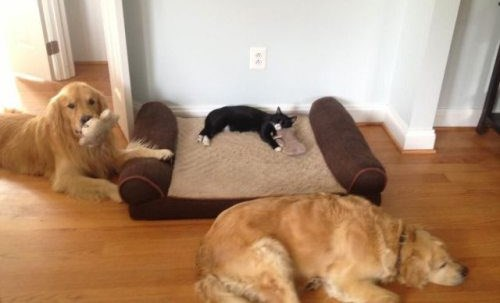 cat-in-dogs-bed