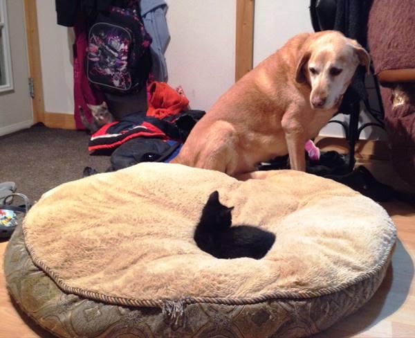 cat-steals-bed-animals-being-jerks