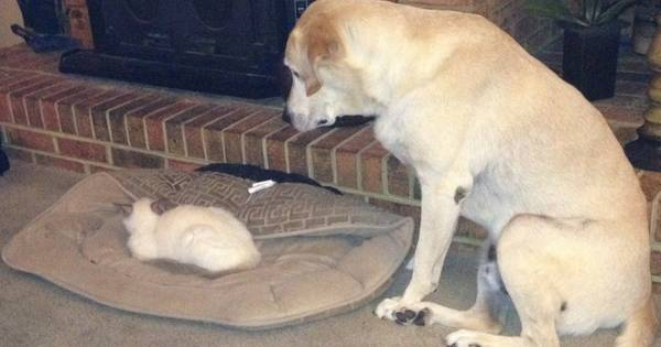 cats-stealing-dog-beds-cover