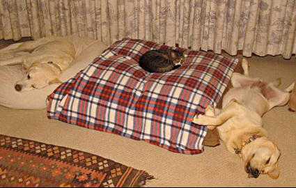 cats-stealing-dog-beds