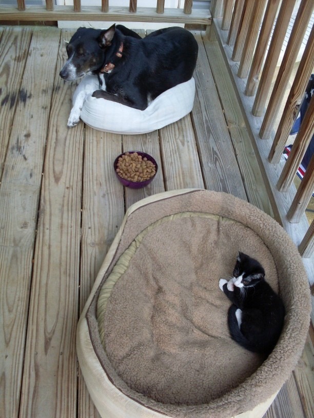 dog-and-cat-on-beds-612x815