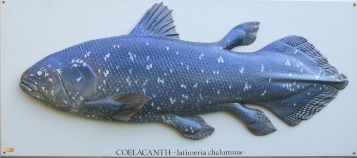 Coelacanth-1