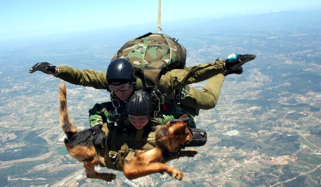 """Austrian special forces parachute dog. 'Dogs don't perceive height difference. … They're more likely to be bothered by the roar of the engines, but once we're on the way down, that doesn't matter and they just enjoy the view. … """"It's something [this dog] does a lot. He has a much cooler head than most recruits."""""""