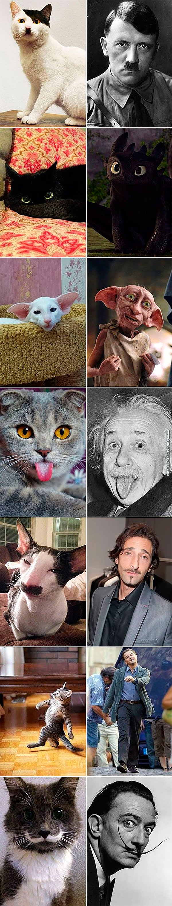 funny-cat-pictures-cats-and-their-doppelganger.jpg