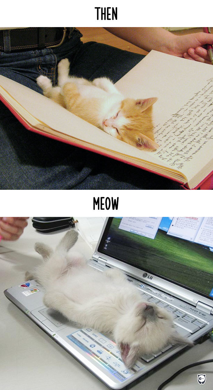 cats-then-now-funny-technology-change-life-8-571614339bfc2__700