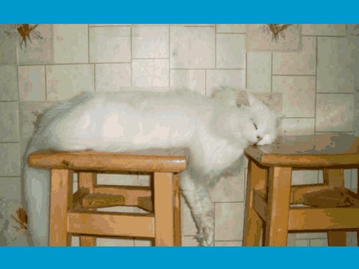 animals-sleeping-cat-2-kj