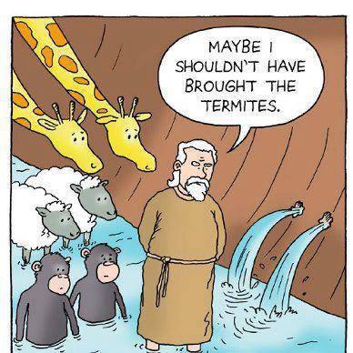 noah-and-termites