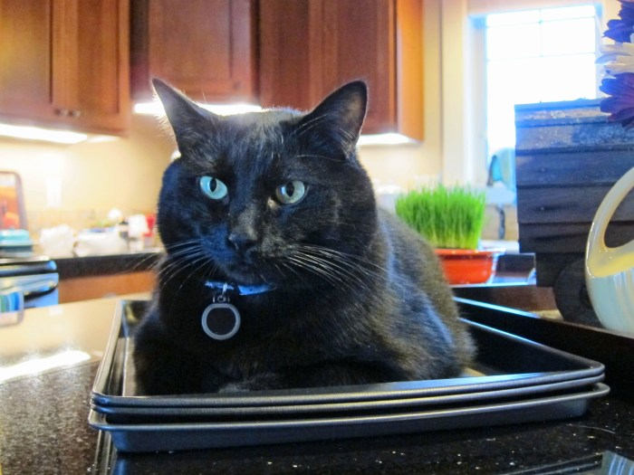 cooking-cats-1