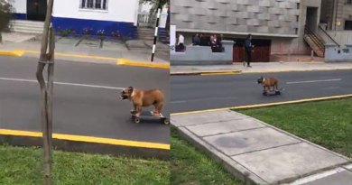 dog on skateboard