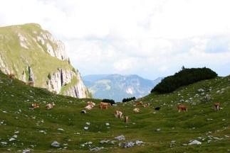 Gardenacia plateau looking towards Peitler Massif