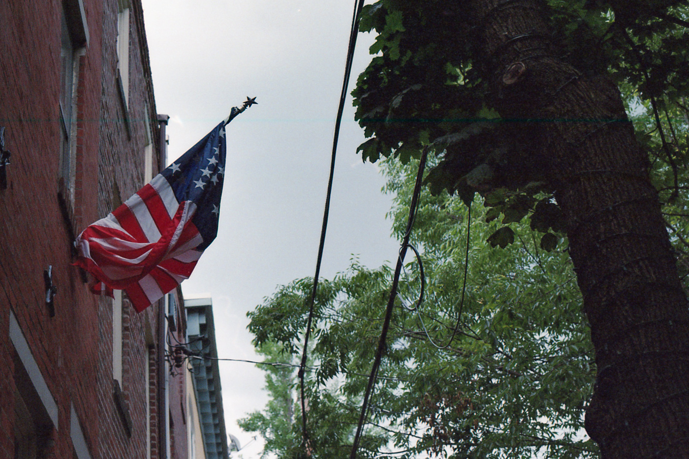 Tangled Flag