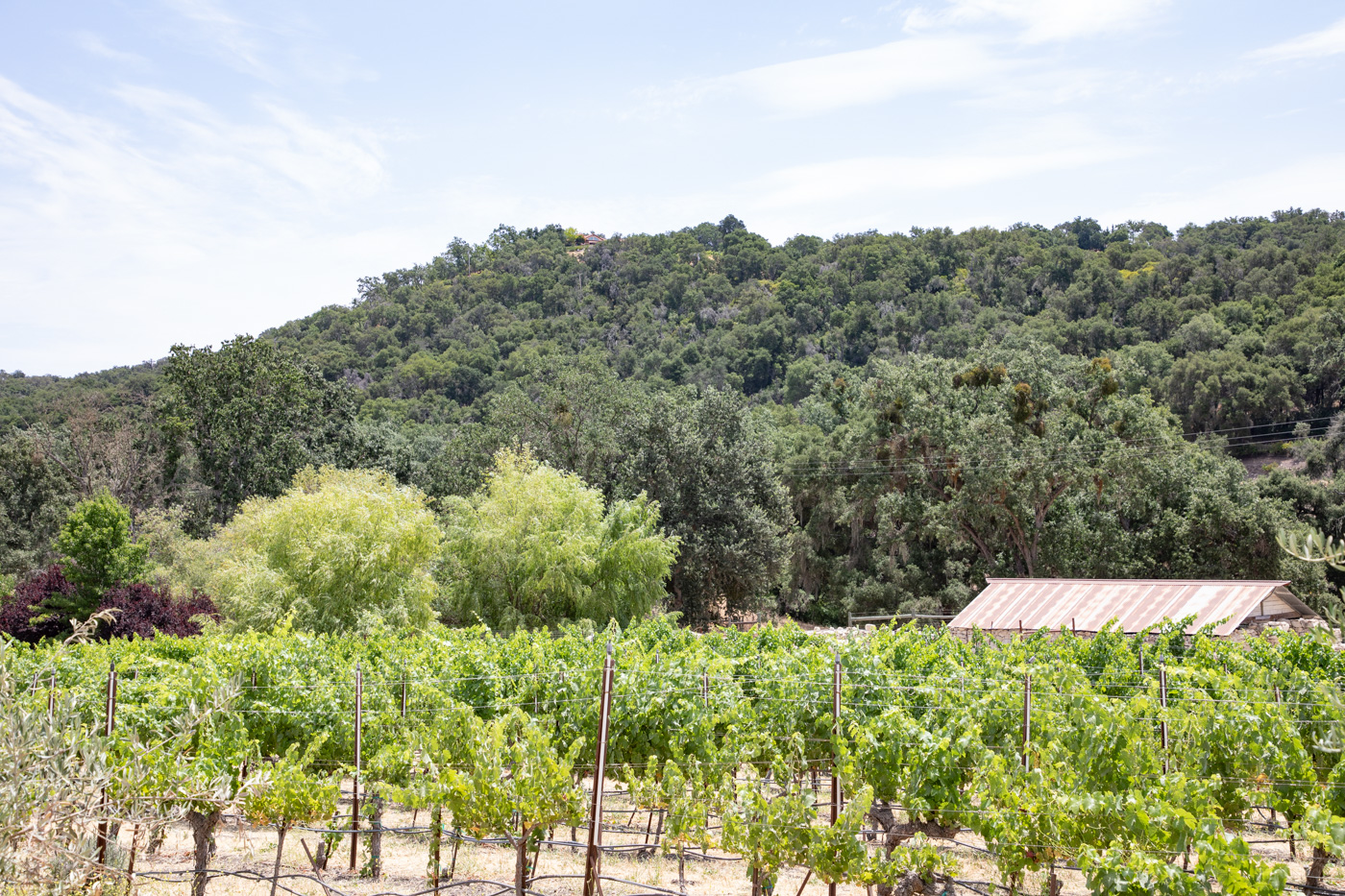 Tablas Creek Vineyard