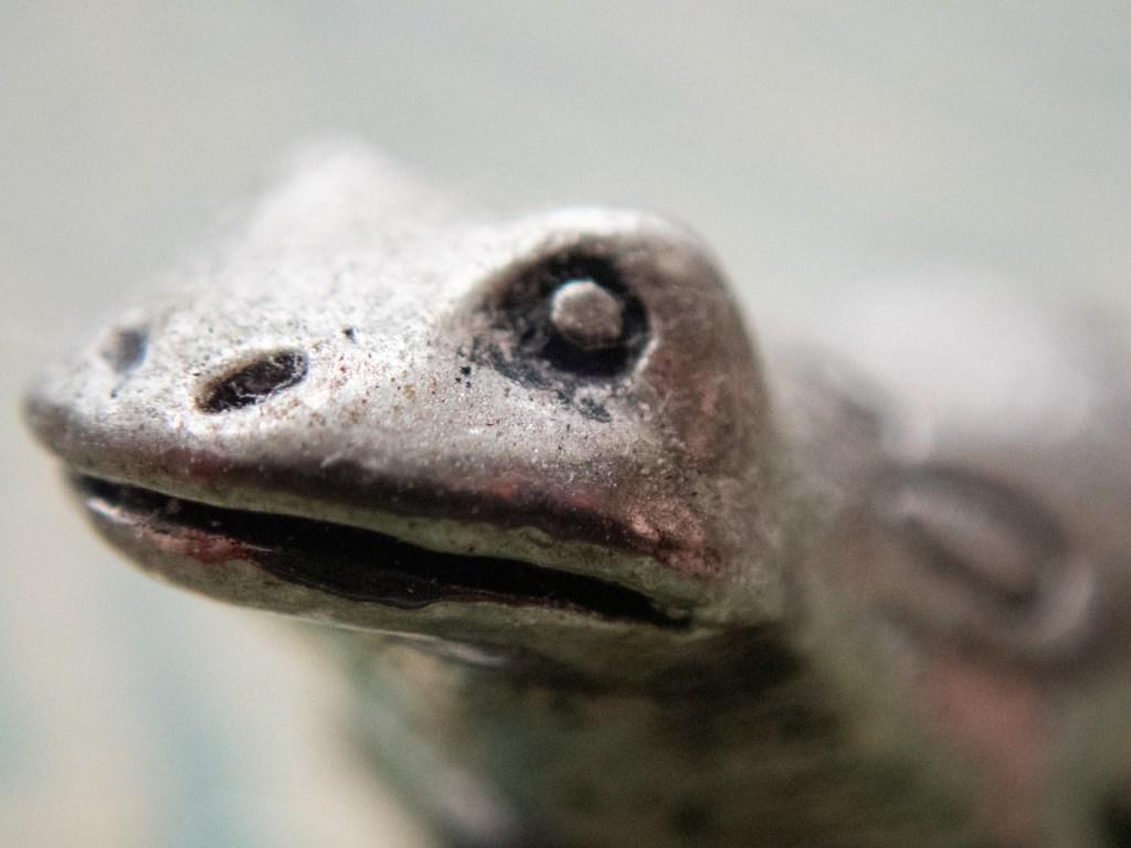Macro Pewter Frog