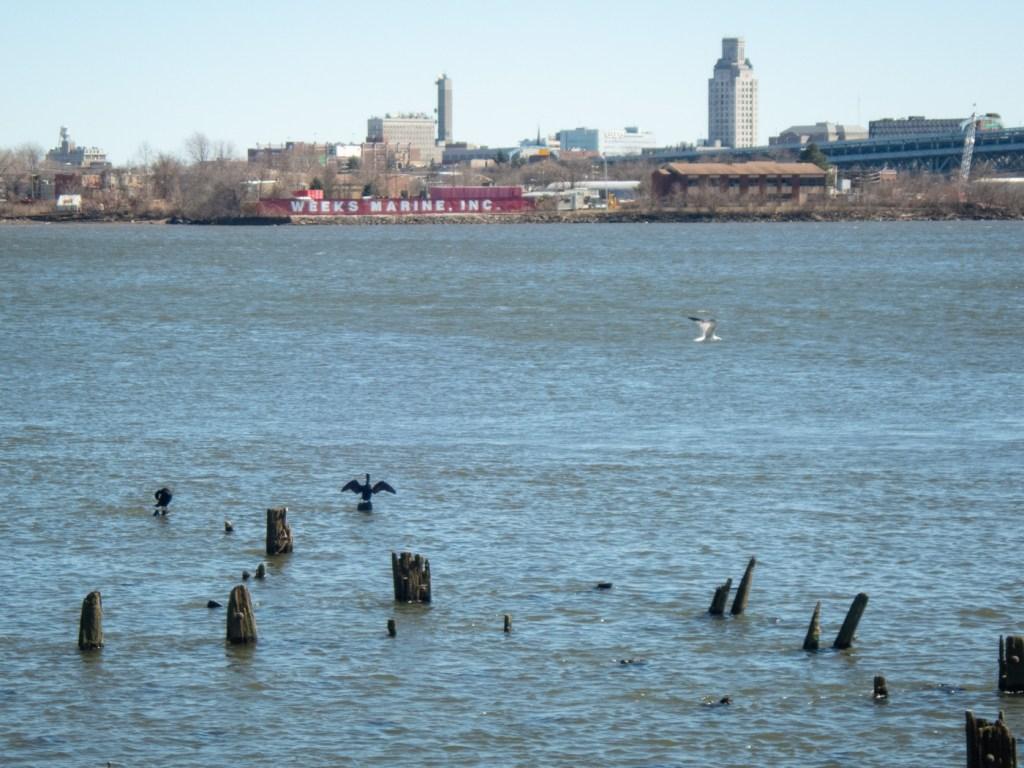 Birds along the Delaware River