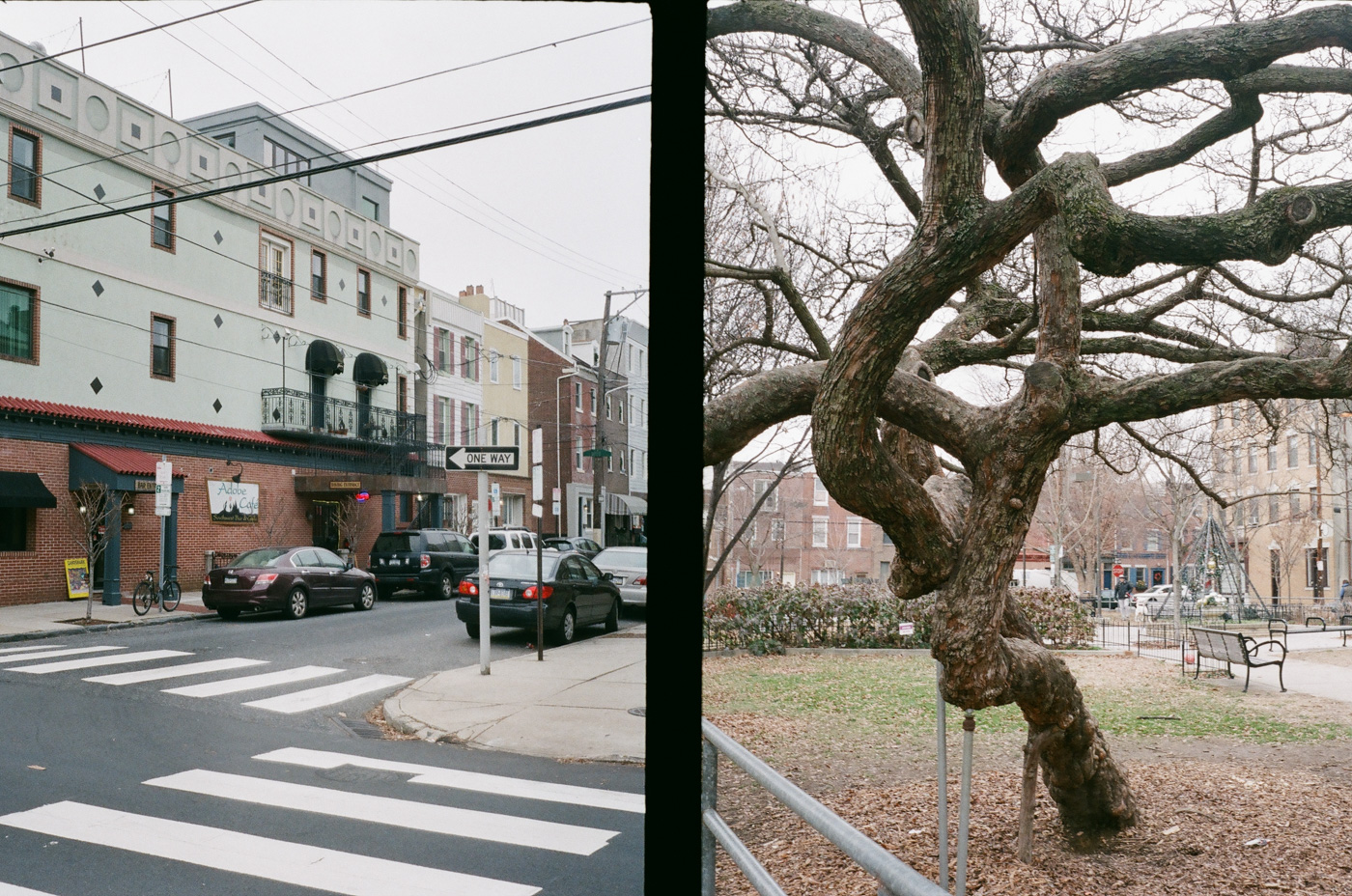 Adobe Cafe and Gnarled Tree
