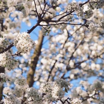 Spring Photos with the Canon EOS Rebel 2000